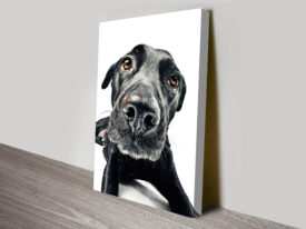 those puppy dog eyes canvas wall art