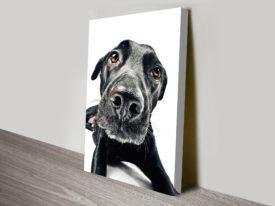 those puppy dog eyes canvas wall art