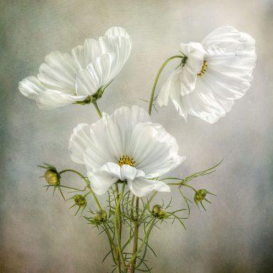 Flower Canvas Art Prints Brisbane