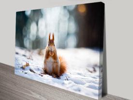 Squirrel Animal Canvas Wall Art Prints