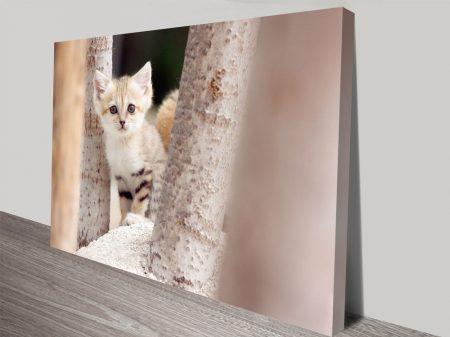 Sand Cat Canvas Wall Art Prints