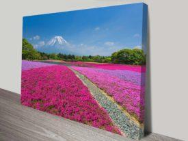 Shibazakura Flower Fields Fuji Japan