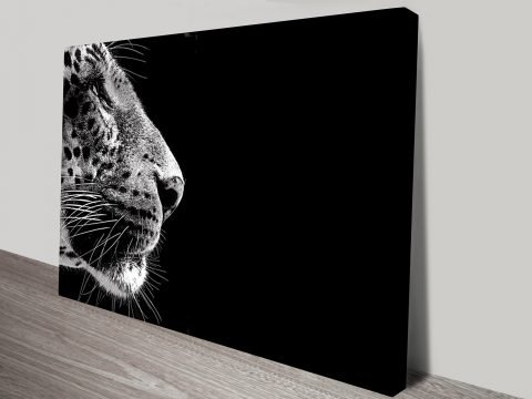 Stare of the Leopard Black and White Canvas Print