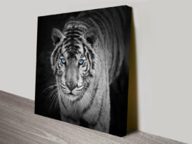 stare of the tiger wall art canvas print