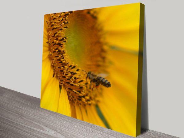 Sunflower Bee Noel Buttler Canvas Art