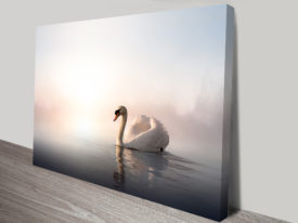 Majestic Swan Animal Wall Art on Canvas