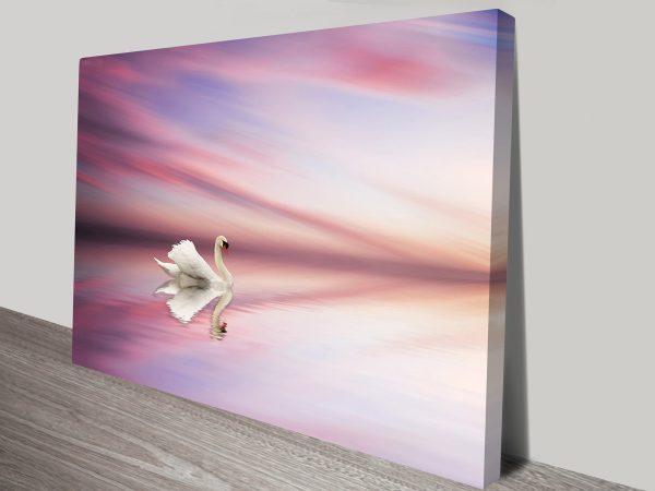 Swan at sunset on lake Photo canvas