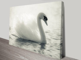 Swan Lake Black and White Canvas Print