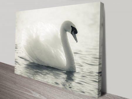 Swan Lake Black and White Canvas Print