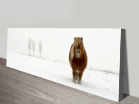 The cold pony canvas print