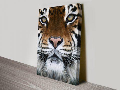 Tigers Eyes canvas prints