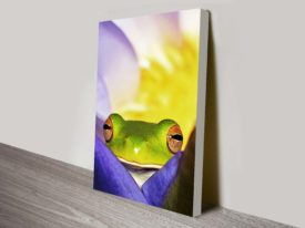 peeping tree frog canvas wall art