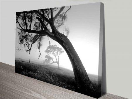 trees at sunrise wall art canvas print
