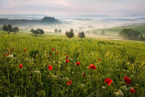 Tuscan spring Landscape canvas print