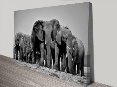 Wandering Herd Elephants Photo Canvas Print