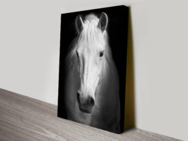 White Horse Black and White Canvas Wall Art