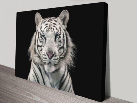White Tiger Art Print on Canvas
