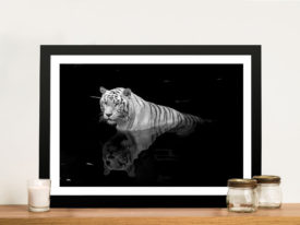 White Tiger in Water Wall Art Print