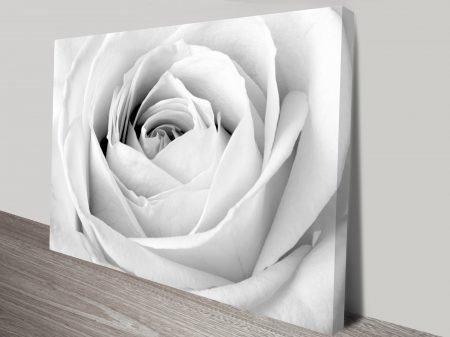 graceful white rose wall art