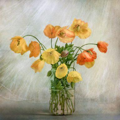 Flower Wall Art Pictures Australia