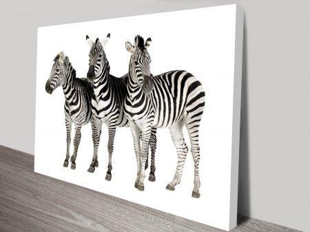 Three Zebras Animal Wall Art on Canvas