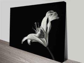monochrome lily wall art canvas print