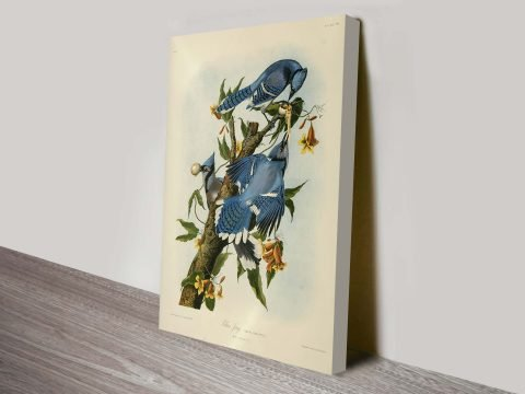 Blue Jay John James Audubon Bird Wildlife Ready to Hang Wall Art