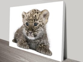 Leopard Cub Animal Wall Art on Canvas