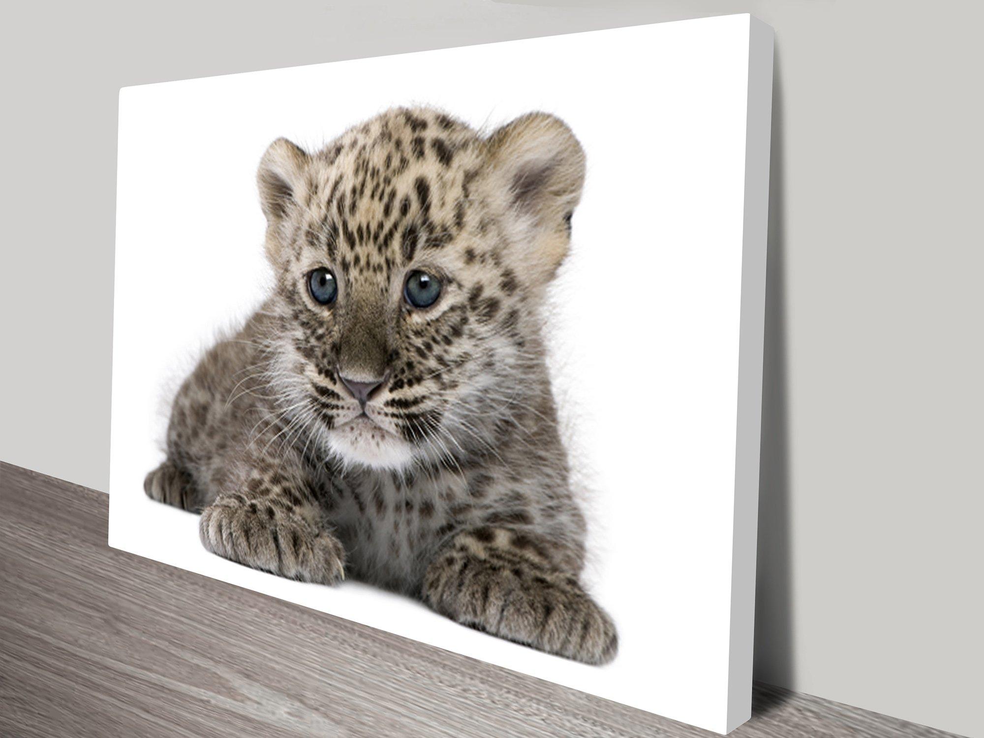 Cute Leopard Cub Wall Art on Canvas
