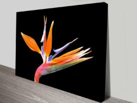 bird of paradise bloom canvas wall art print