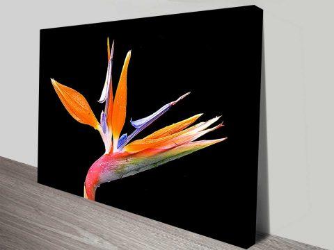 bird of paradise bloom canvas wall art print