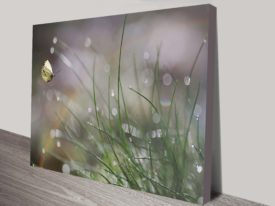 Rain Drops Large Picture Canvas Art