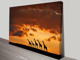 five kangaroos wall art print on canvas australia