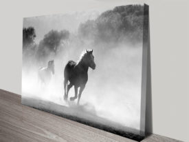 Galloping Grey Photo Canvas Prints