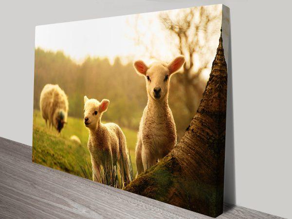 Spring Lambs Animal Wall Art on Canvas