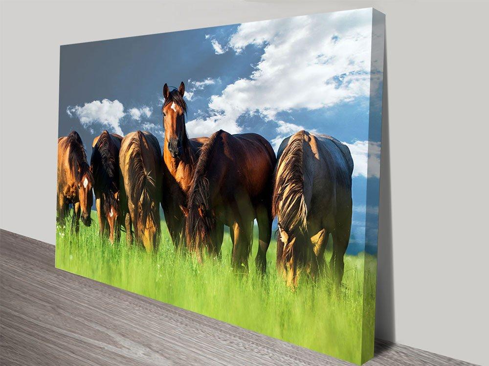 Six Horses Grazing Photo Canvas Print Brisbane Australia