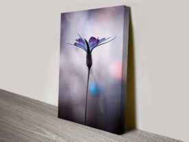 Solitary Purple Canvas Wall Art Pictures