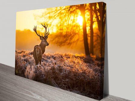 stag sunset canvas print glebe