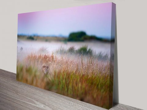 Stalking Lioness Cheap Printed Canvas Pictures