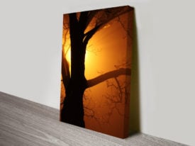 Silhouetted Tree at Sunset Stretched Canvas