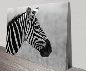 Lone Zebra Animal Wall Art on Canvas